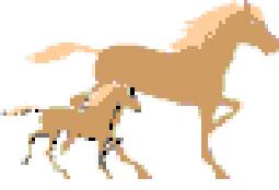 horsesnaturally_logo